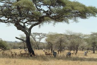 Tanzania, reino salvaje